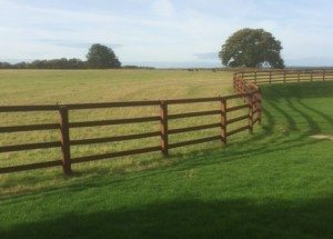 macdonald-post-and-rail-fencing-horsley
